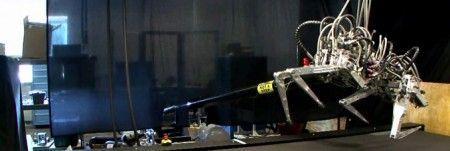 video-robot-cheetah